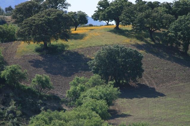 Dehesa: half open bos-weide landschap