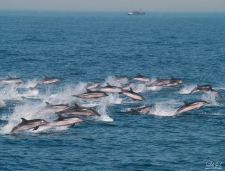 Dolfijnexcursie bij Tarifa