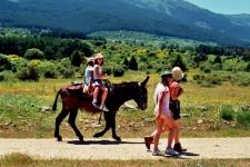 Wandelen met een ezel bij Segovia