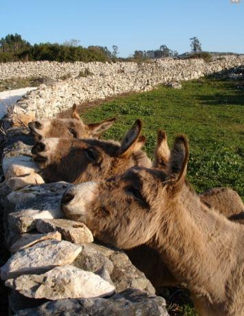 Voor de kinderen: rijden op een ezel