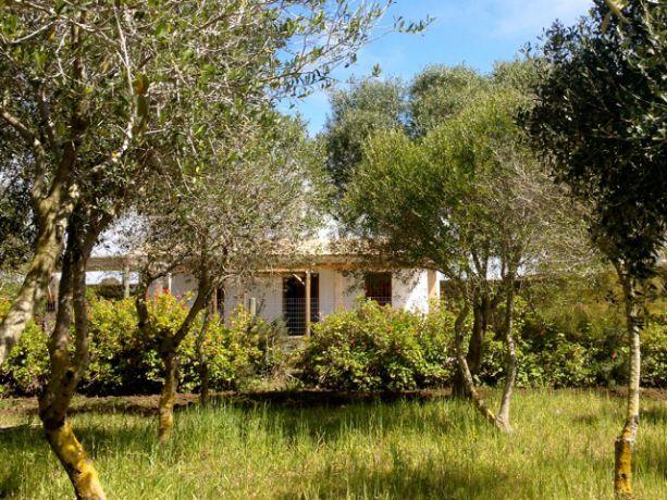 Een van de 4 huizen vanuit de boomgaard gezien