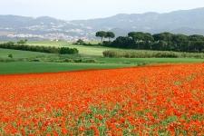 Landschap bij Segovia