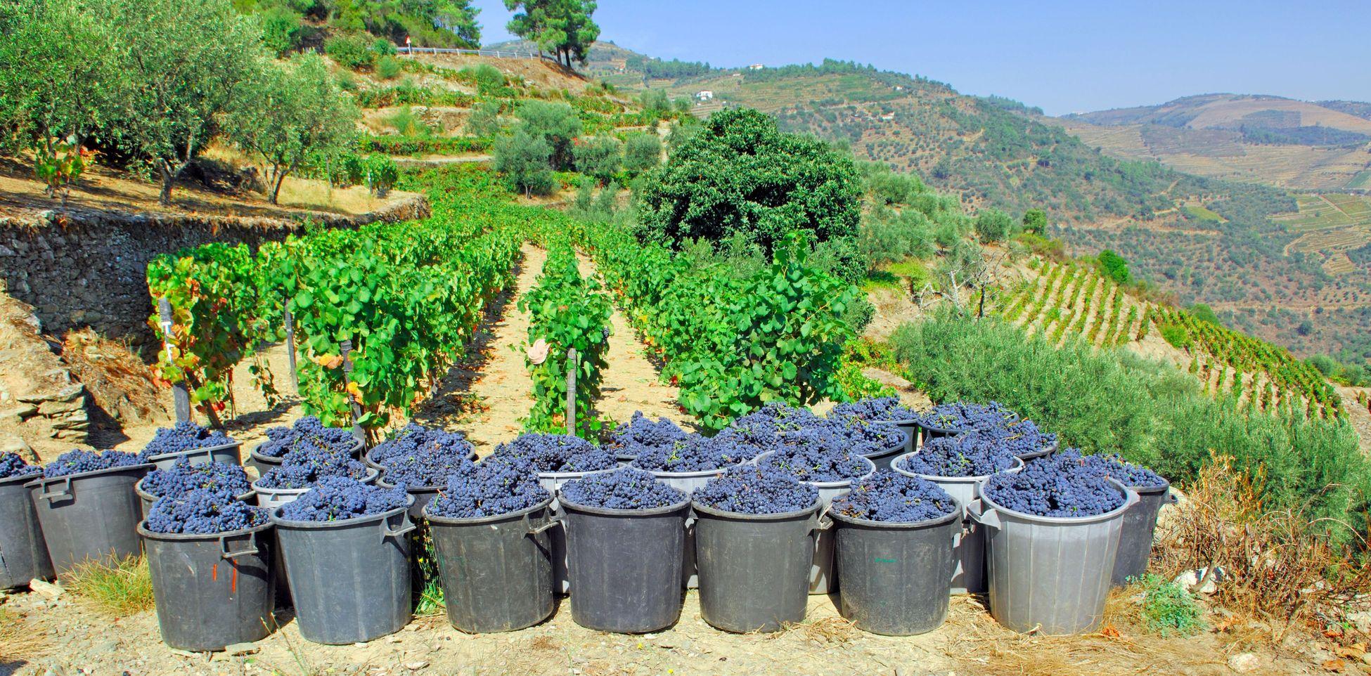 Wijngaarden in de Dourovallei - Portugal