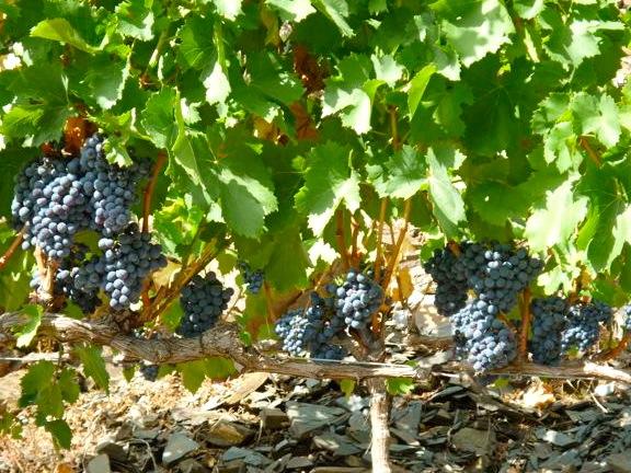 Wijngaarden Priorat