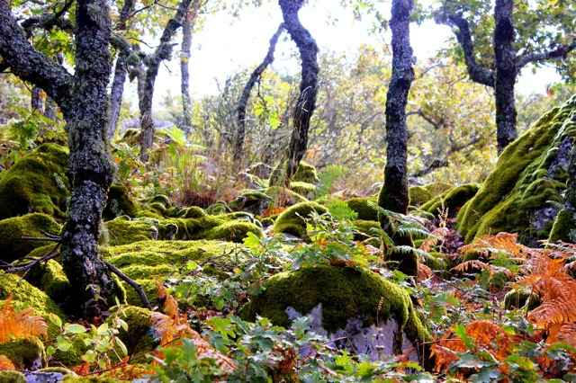 Bos in de valle de Villuercas