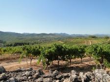 Wijngaarden in de Priorat